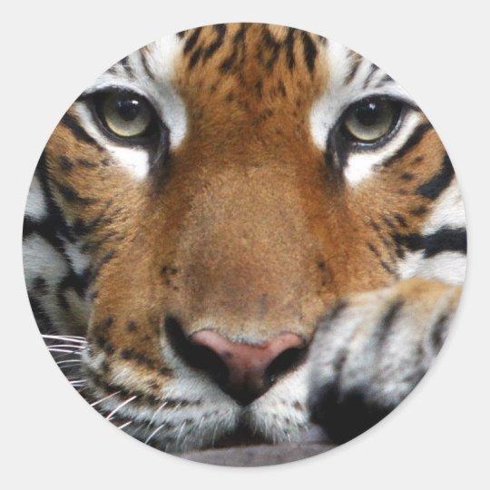 Malayan Tiger #3 sticker