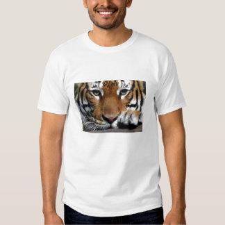 Malayan Tiger #3 T Shirt