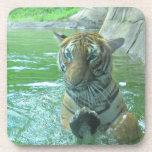 Malayan Tiger Beverage Coaster