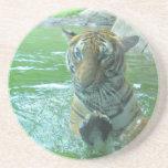 Malayan Tiger Coasters