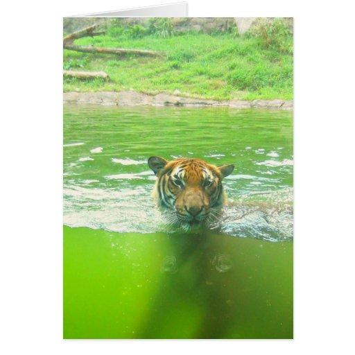 Malayan Tiger Greeting Card