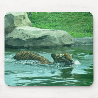 Malayan Tiger swimming in stream Mouse Pad