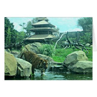 Malayan Tiger wading into stream Card
