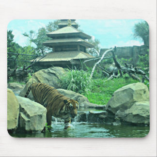 Malayan Tiger wading into stream Mouse Pad