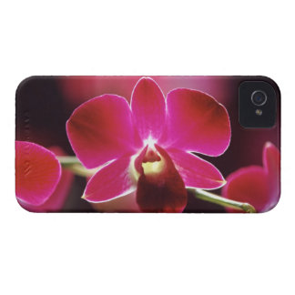 Malaysia, Orchid iPhone 4 Cover