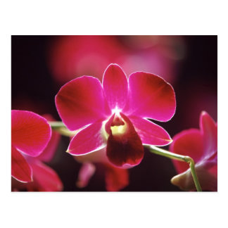 Malaysia, Orchid Postcard