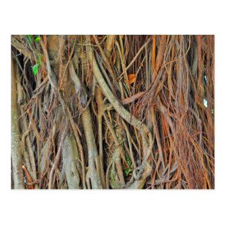 Malaysian Banyan Tree Roots Postcard