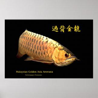 Malaysian Golden Arowana Poster