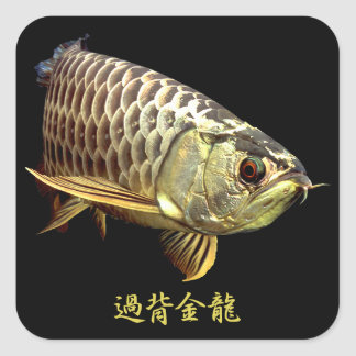 Malaysian Golden Arowana Square Sticker