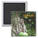 Malaysian Monkey Fridge Magnet