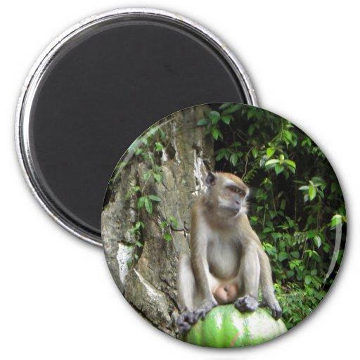 Malaysian Monkey Fridge Magnets