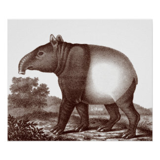 Malaysian Tapir in a Landscape from Antique Print