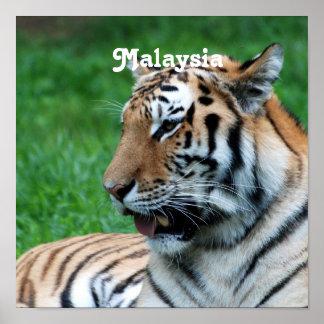 Malaysian Tiger Poster
