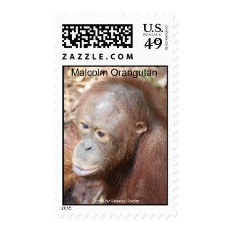 Malcolm Orangutan animal postage