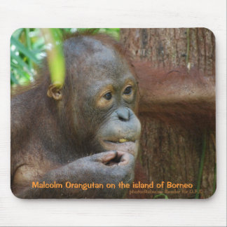 Malcolm Orangutan in Borneo Rainforest Mouse Pad