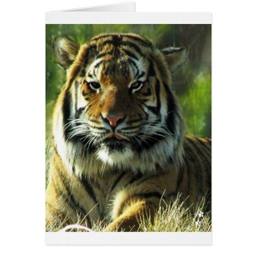 Maldición del tigre tarjetas