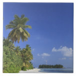 Maldivas, atolón de Meemu, isla de Medhufushi Azulejos