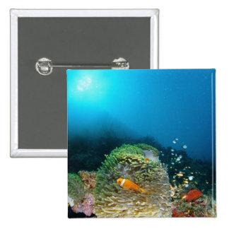 Maldives Anemone fish swimming underwater Pins