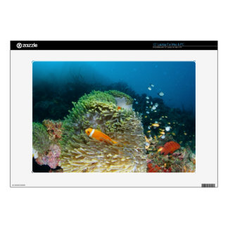 Maldives Anemone fish swimming underwater Decal For Laptop