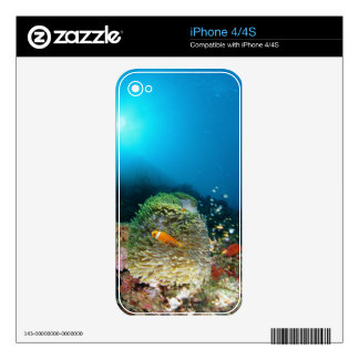Maldives Anemone fish swimming underwater Decals For The iPhone 4S