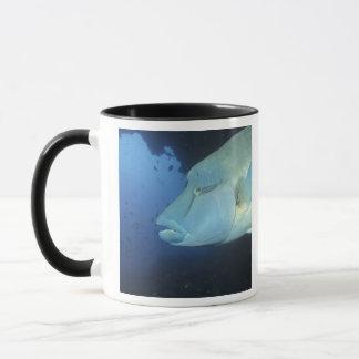 Maldives, Napoleanfish Chelinus undulatus) Mug
