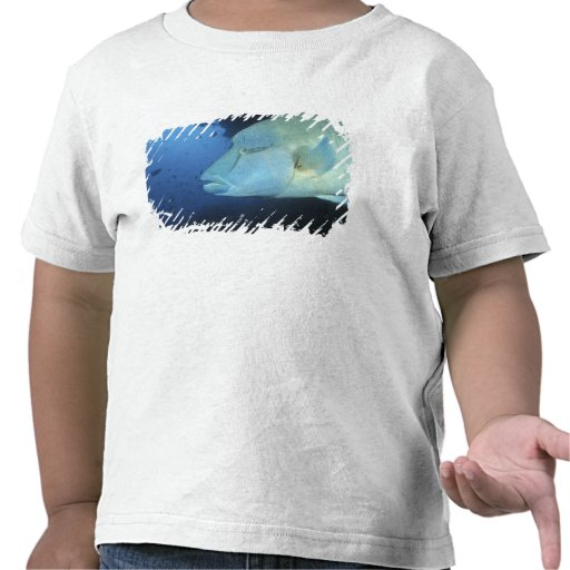Maldives, Napoleanfish Chelinus undulatus) Tshirt