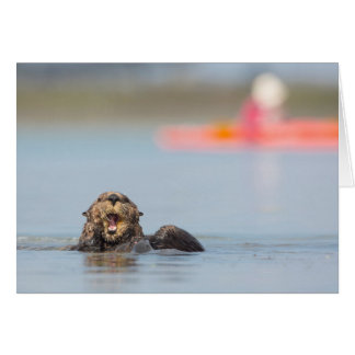 Male adult sea otter in Elkhorn Slough, California Card