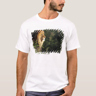Male African lion at the zoo in Washington, D.C. 2 T-Shirt
