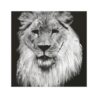 Male African Lion in Black and White Wrapped Canva Canvas Print