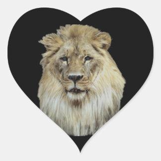 Male African Lion Portrait Heart Sticker