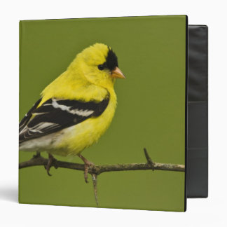 Male American Goldfinch in breeding plumage, 3 Ring Binder