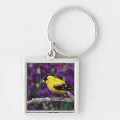 Male, American Goldfinch in summer plumage, Key Chain