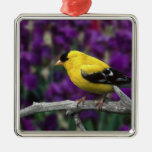 Male, American Goldfinch in summer plumage, Ornaments