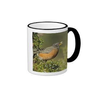 Male American Robin eating juniper tree Coffee Mug