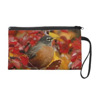 Male American Robin in Black Hawthorn 2 Wristlet Purse
