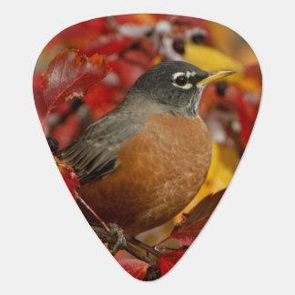 Male American Robin in Black Hawthorn 2 Guitar Pick