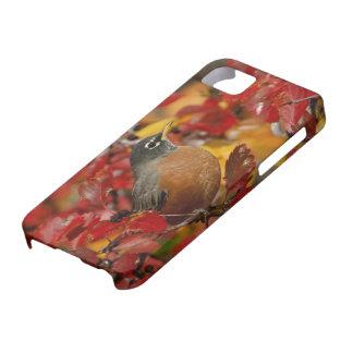 Male American Robin in Black Hawthorn 2 iPhone SE/5/5s Case