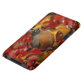 Male American Robin in Black Hawthorn 2 iPod Touch Case-Mate Case