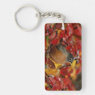 Male American Robin in Black Hawthorn 2 Keychain