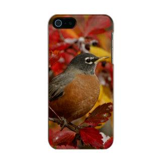 Male American Robin in Black Hawthorn 2 Metallic Phone Case For iPhone SE/5/5s