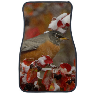 Male American Robin in Black Hawthorn Car Floor Mat