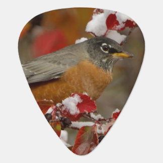 Male American Robin in Black Hawthorn Guitar Pick
