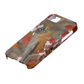 Male American Robin in Black Hawthorn iPhone SE/5/5s Case