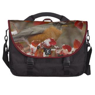 Male American Robin in Black Hawthorn Laptop Messenger Bag
