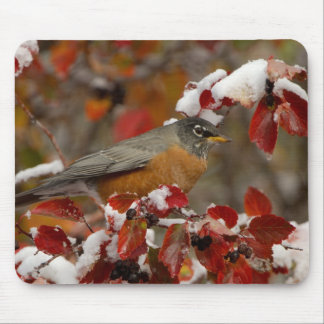 Male American Robin in Black Hawthorn Mouse Pad