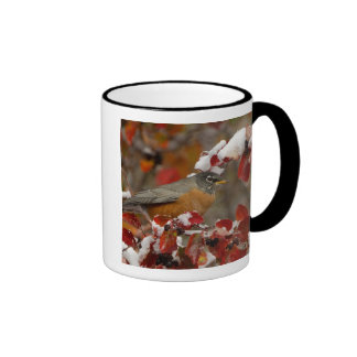 Male American Robin in Black Hawthorn Mugs
