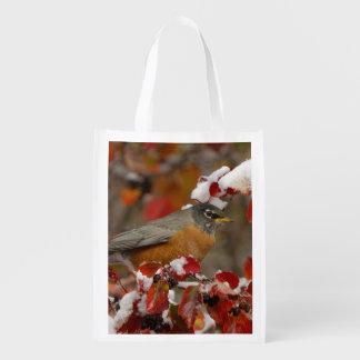 Male American Robin in Black Hawthorn Grocery Bags