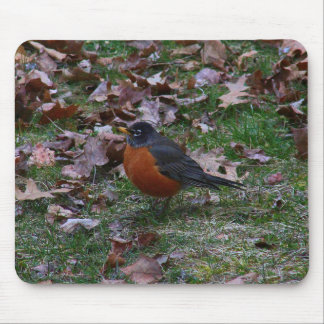 Male American Robin Mouse Pad