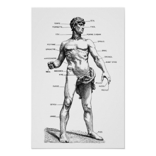 Male Anatomy - front Poster