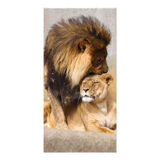 Male and Female Lion in Love Card